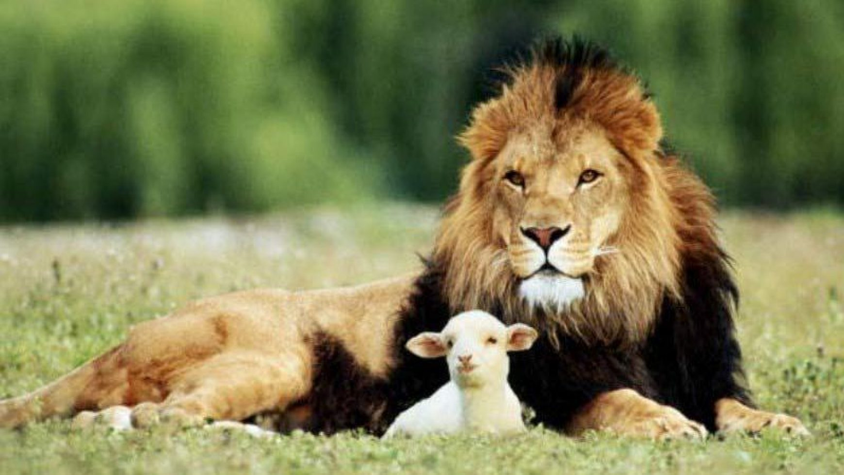 "Words of Hope – ""In like a lion, out like a lamb."""